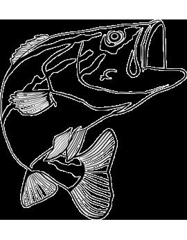 Sitckers poisson pêche carpe
