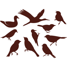 Stickers kit oiseaux plusieurs races