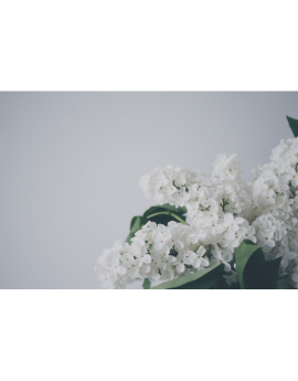 Poster fleurs blanche