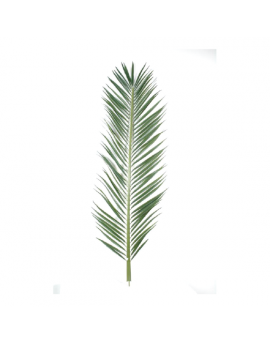 Poster feuille de palmier