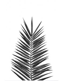 Poster feuille de palmier noir et blanc