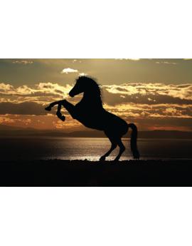 Poster cheval cabré