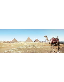 Poster chameau