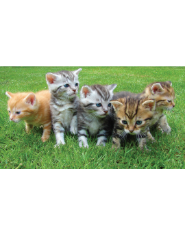 Poster chatons