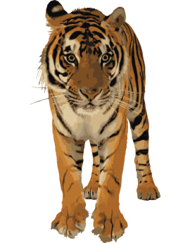 Sticker tigre d'Afrique réaliste